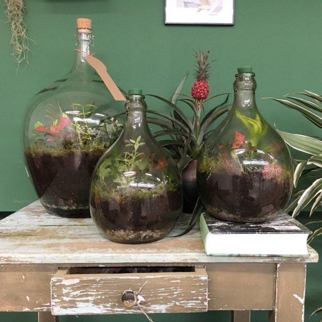 Sustainable world of plants    sustainableworld plants plantenhellip