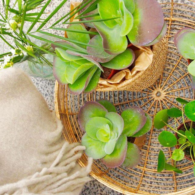 Vandaag is het Nationale plantendag! Daarom een mooie foto vanhellip